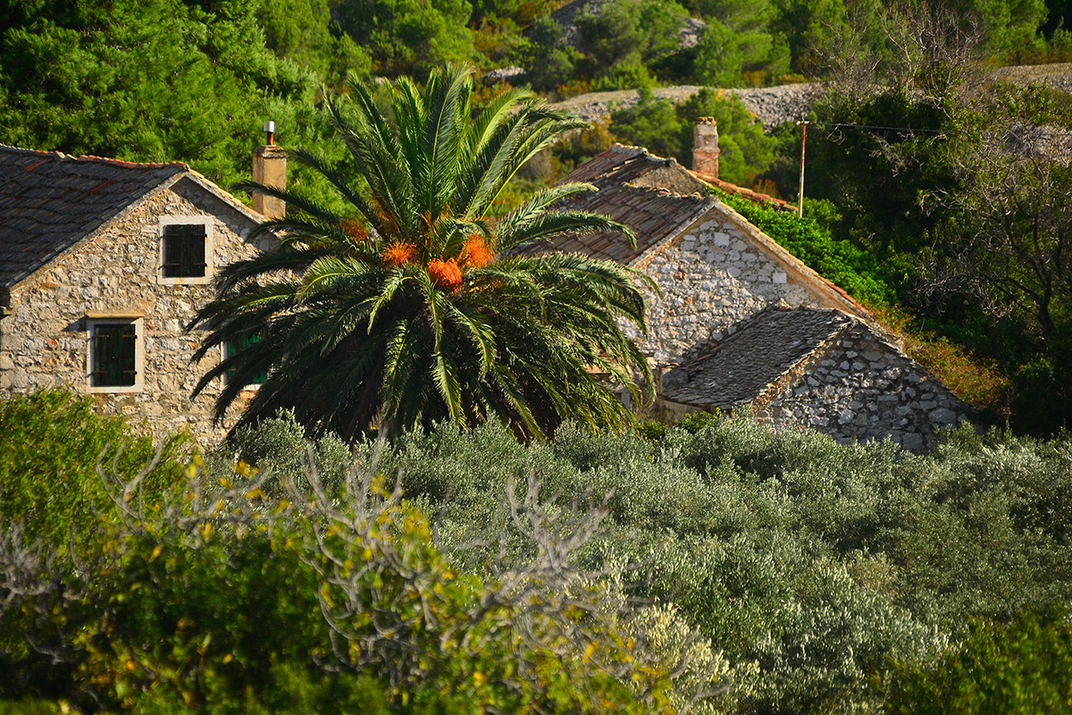 Old stone houses and palm trees in the interior of the island of Vis