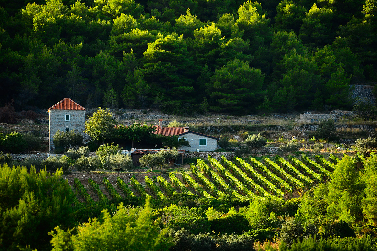 Old stone estate and vineyard in the interior of the island of Vis